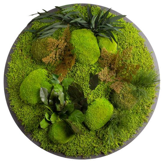 Runde Pflanzenbilder
