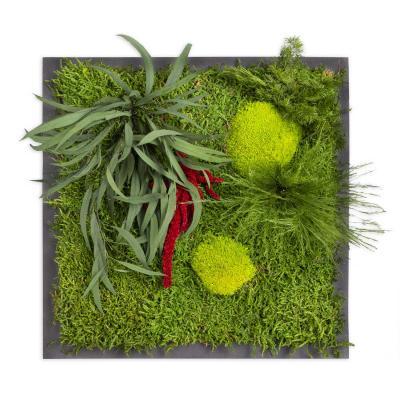 """Moosbild """"Pflanze"""" - 35 x 35 cm - Holzfaserplatte anthrazit"""