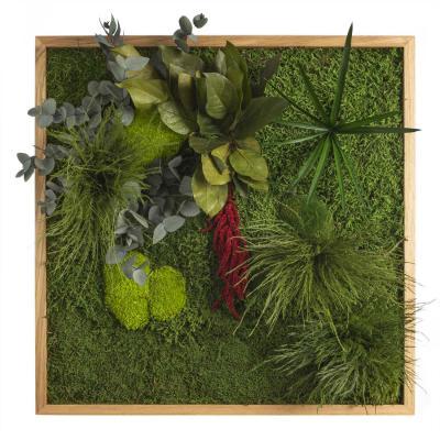 "Moosbild ""Pflanze"" - 55 x 55 cm"