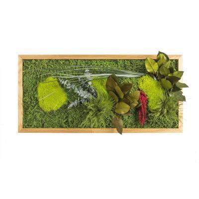 "Moosbild ""Pflanze"" - 57 x 27 cm"
