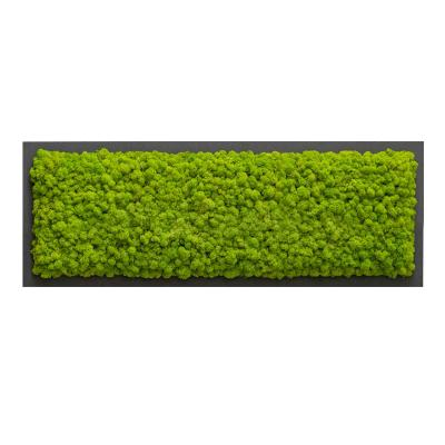 Moosbild mit Islandmoos - 70 x 20 cm - Holzfaserplatte anthrazit