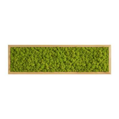 Moosbild mit Islandmoos - 70 x 20 cm