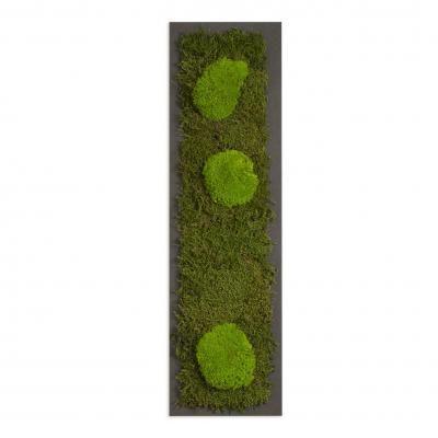 Moosbild mit Kugelmoos und Waldmoos - 70 x 20 cm - Holzfaserplatte anthrazit