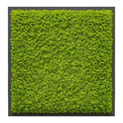 Moosbild mit Islandmoos - 80 x 80 cm