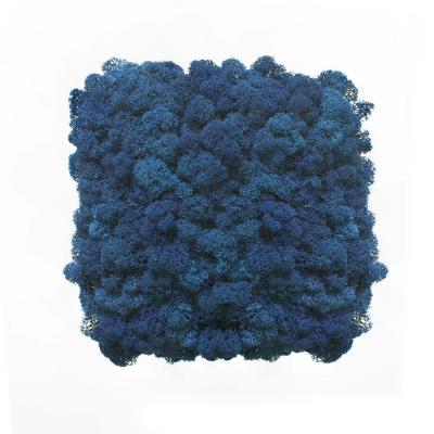 Moos Wandverkleidung - Amalia - 25 x 25 cm - blau