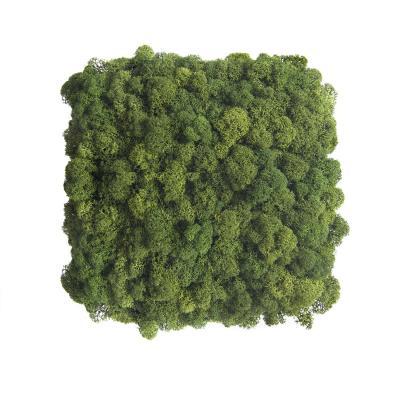 Moos Wandverkleidung - Amalia - 25 x 25 cm - dunkelgrün