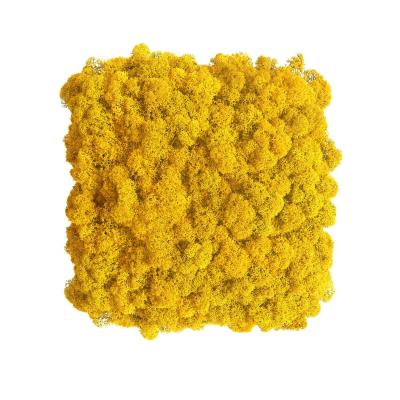 Moos Wandverkleidung - Amalia - 25 x 25 cm - gelb
