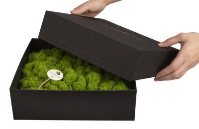 Amalia in Geschenkverpackung - 25 x 25 cm - grün
