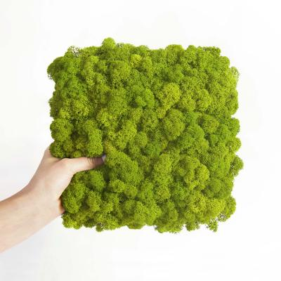 Moos Wandverkleidung - Amalia - 25 x 25 cm - grün