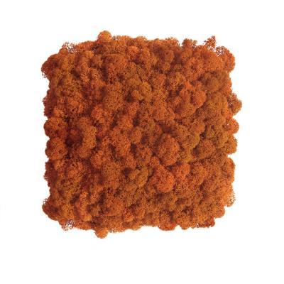 Moos Wandverkleidung - Amalia - 25 x 25 cm - orange