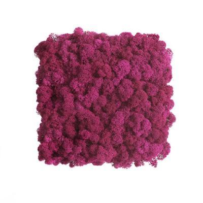 Moos Wandverkleidung - Amalia - 25 x 25 cm - pink