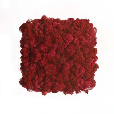 Moos Wandverkleidung - Amalia - 25 x 25 cm - rot