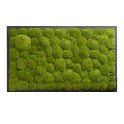 Moosbild mit Kugelmoos - 100 x 60 cm - Holzfaserplatte anthrazit