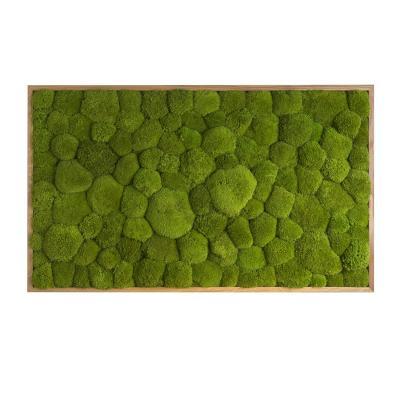 Moosbild mit Kugelmoos - 100 x 60 cm - Holzrahmen Eiche geölt