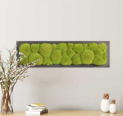Moosbild mit Kugelmoos - 70 x 20 cm