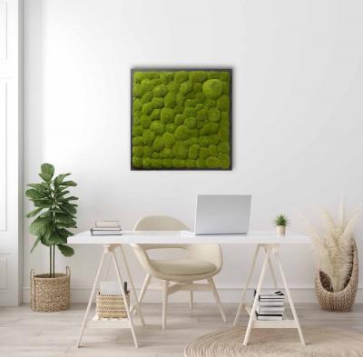 Moosbild mit Kugelmoos - 80 x 80 cm