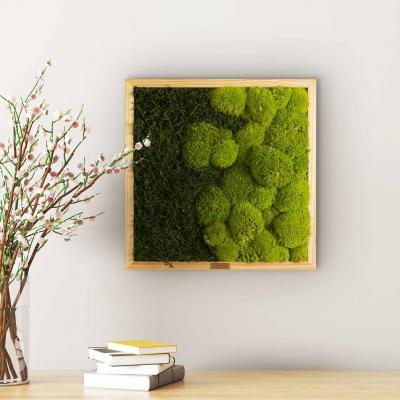 """Moosbild """"Verlauf"""" mit Wald- und Ballenmoos 35 x 35 cm"""