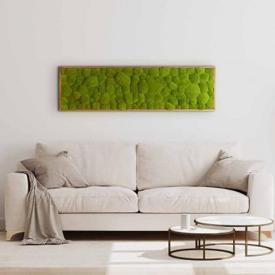 Moosbild mit Kugelmoos - 140 x 40 cm