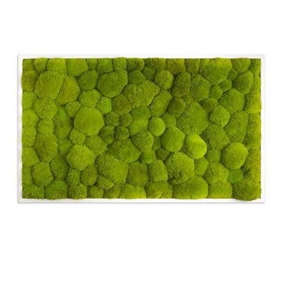 Moosbild mit Kugelmoos - 100 x 60 cm