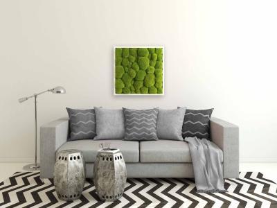 Moosbild mit Kugelmoos - 55 x 55 cm - Holzrahmen weiß lackiert