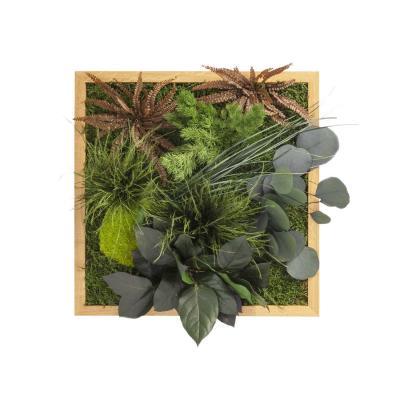 """Moosbild """"Dschungel"""" - 35 x 35 cm - Holzrahmen Eiche geölt"""