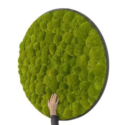 Rundes Gigant Moosbild Ø 118 cm Kugelmoos in Grün auf Holzfaserplatte Anthrazit