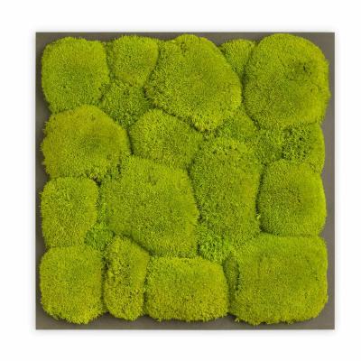 Moosbild mit Kugelmoos - 35 x 35 cm - Holzfaserplatte