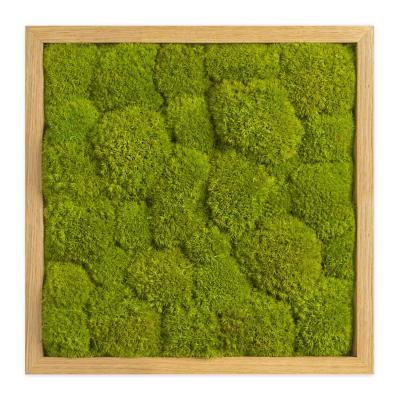 Moosbild mit Kugelmoos - 35 x 35 cm - Holzrahmen