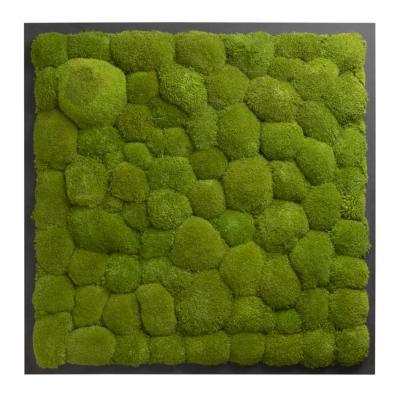 Moosbild mit Kugelmoos - 80 x 80 cm - Holzfaserplatte anthrazit