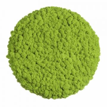 Moos ´Circle´ Islandmoos Apfelgrün