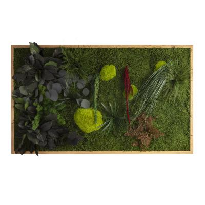 "Moosbild ""Pflanze"" - 100 x 60 cm"