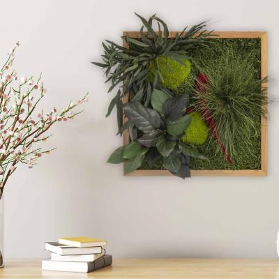 "Moosbild ""Pflanze"" - 35 x 35 cm"
