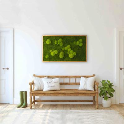Moosbild mit Kugelmoos und Waldmoos - 100 x 60 cm