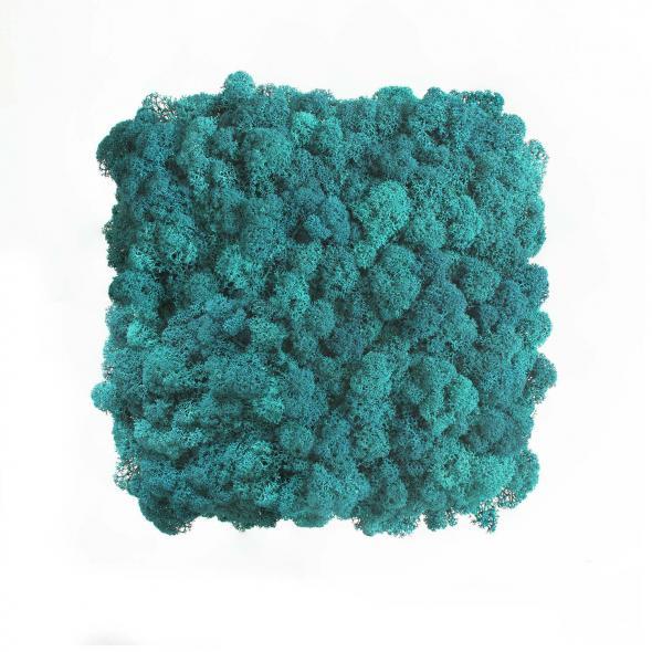 Moos Wandverkleidung - Amalia - 25 x 25 cm - hellblau