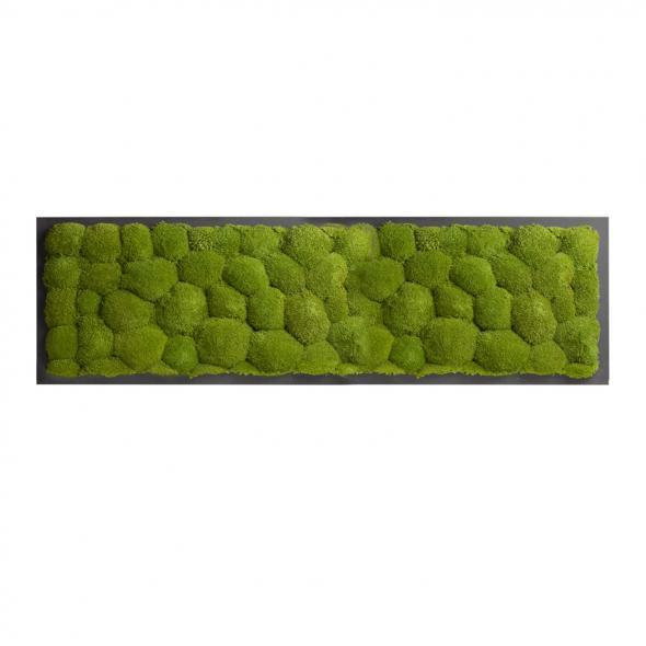 Moosbild mit Kugelmoos - 140 x 40 cm - Holzfaserplatte anthrazit