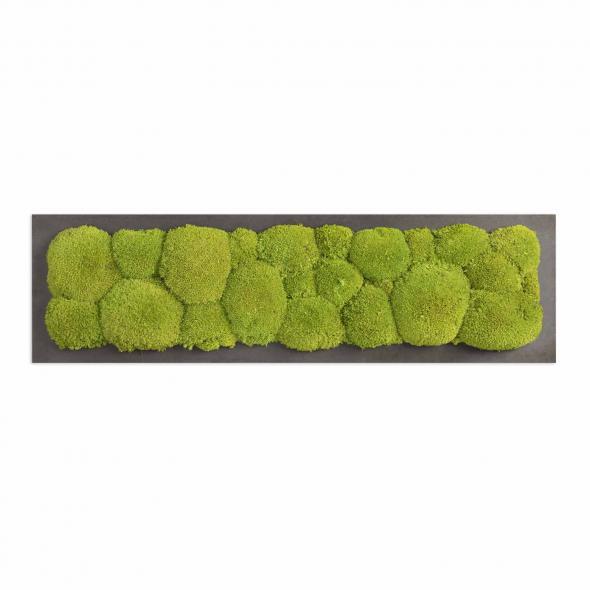 Moosbild mit Kugelmoos - 70 x 20 cm - Holzfaserplatte anthrazit